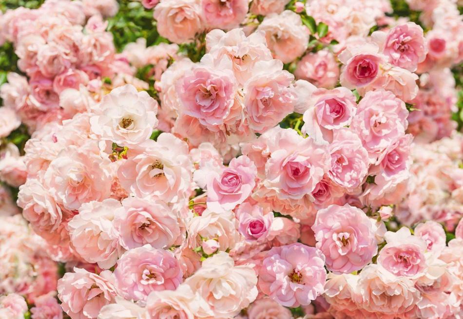 Фото цветов высокого качества и большого размера